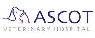 Ascot Veterinary Hospital